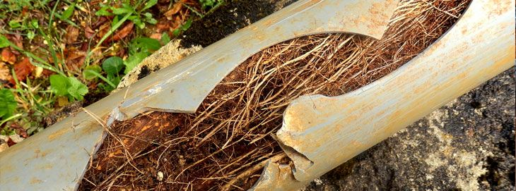 Sewer Line Repairs When Tree Roots Invade